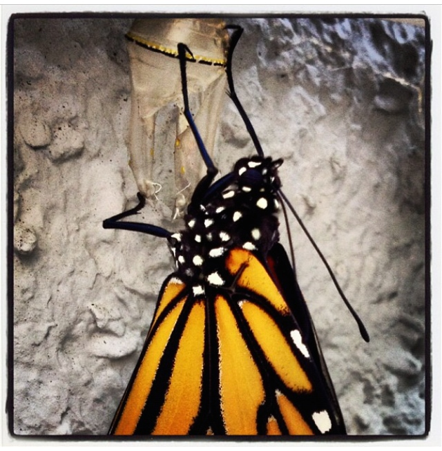 Where Have All Monarchs Gone >> Where Have All The Monarchs Gone Inthegardenofthedivine