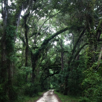 deep in the oak trees at Guana Wildlife Preserve